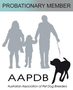 Australian Association of Pet Dog Breeders (AAPDB)